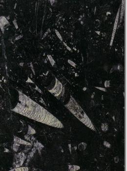 Black-Fossil